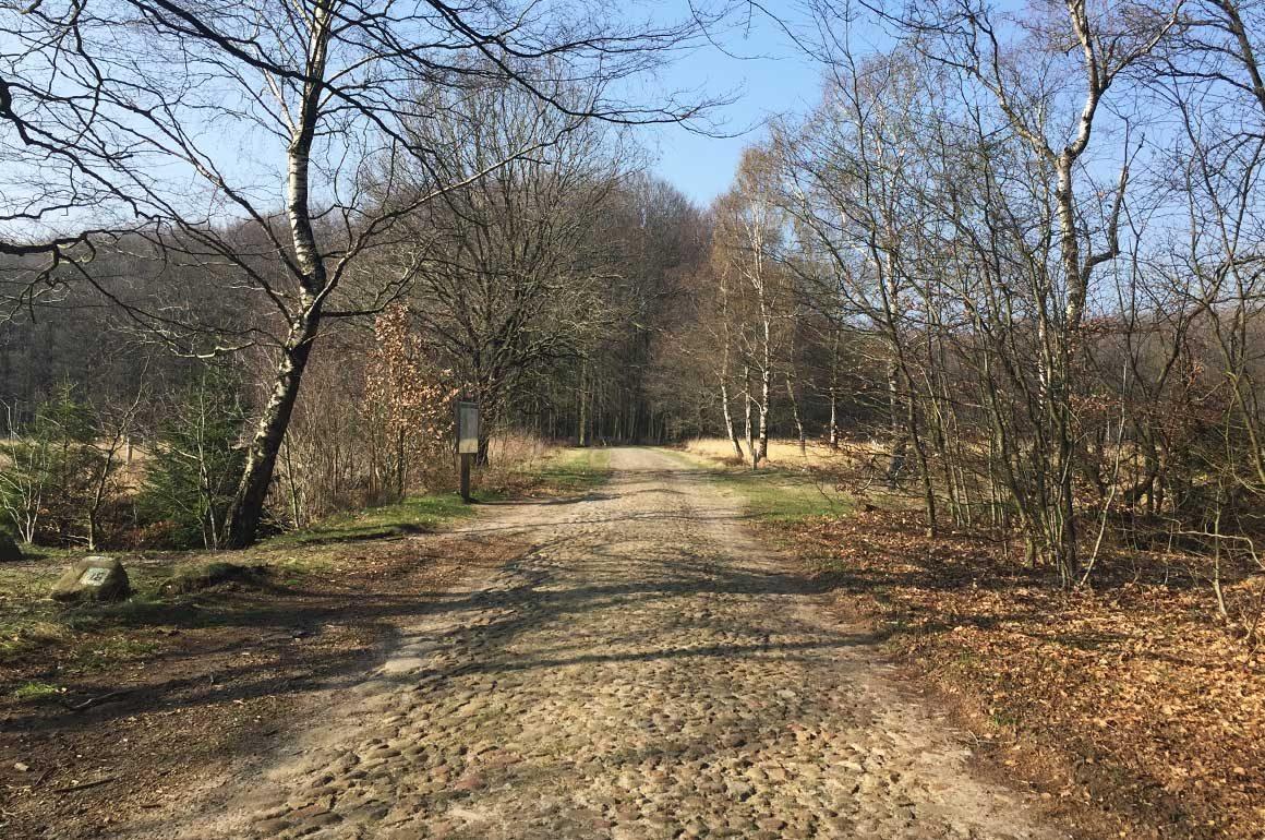 Kasseienstrook in boswachterij Gieten-Borger.
