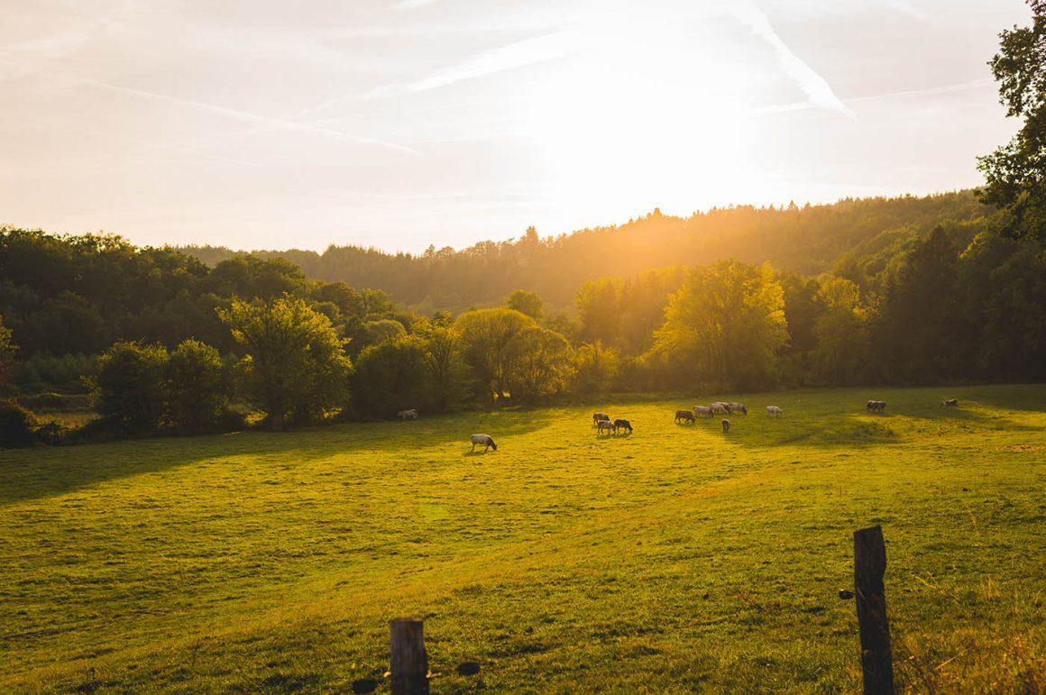Fietsvakantie Ardennen